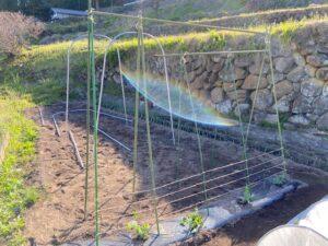 つる苗の柵